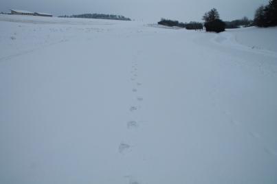 Liane Scholl und Spuren im Schnee