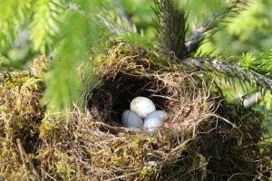 Vogelnest mit Kuckucksei mit digitaler Bildbearbeitung